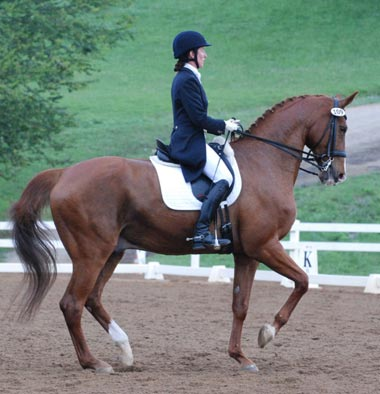 Amicelli, Grand Prix Gelding owned by Barbara Strawson and Jennifer Foulon